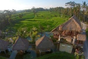 Bali_3_500x333