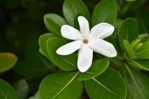 Polynesie_6_500x333