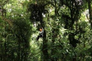 Costa-Rica_6_500x333